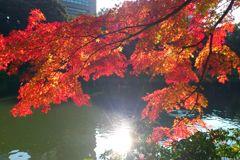 koishikawa_park_05