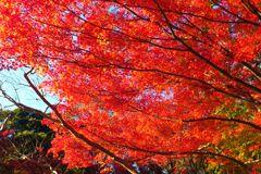 koishikawa_park_07