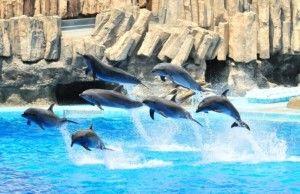 出典:http://www.gooleisure.jp/aquarium/topics/easy_access/