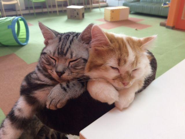 4うちの猫たち (1)