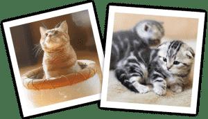 cat_party-MJ-01
