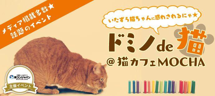 ドミノde猫@猫カフェMOCHA