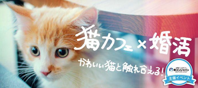 neko_cafe-konkatsu